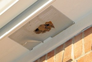 Solar Attic Ventilation Insect Barrier