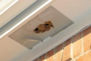 Solar Attic Fan Bees Amp Wasps