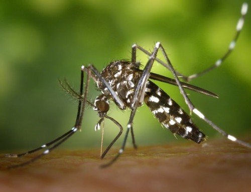 Cutting spread of disease from mosquitos off at their source